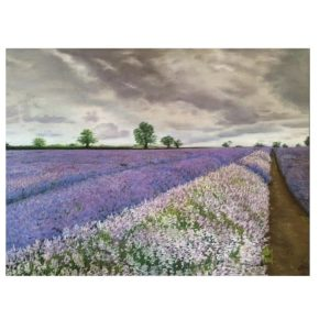 LAVENDER FIELD BEFORE THE STORM